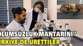 ÖLÜMSÜZLÜK MANTARINI TÜRKİYE'DE ÜRETTİLER